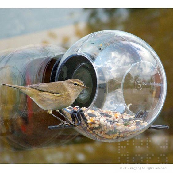 Challenge-Window Bird Feeder