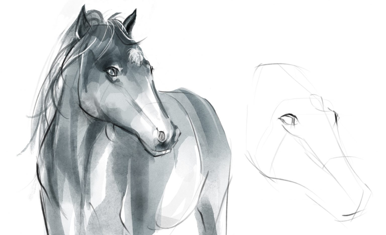 Read more about the article Drawing Animals – Anatomy & Construction